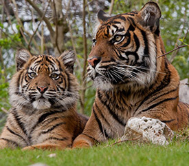 3 days Burgers Zoo Package_3